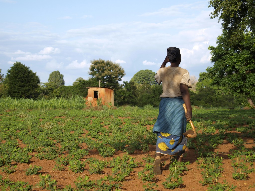 Woman working in her field in Village of Tanchara, Ghana. Photo by Kaitlyn Criddle